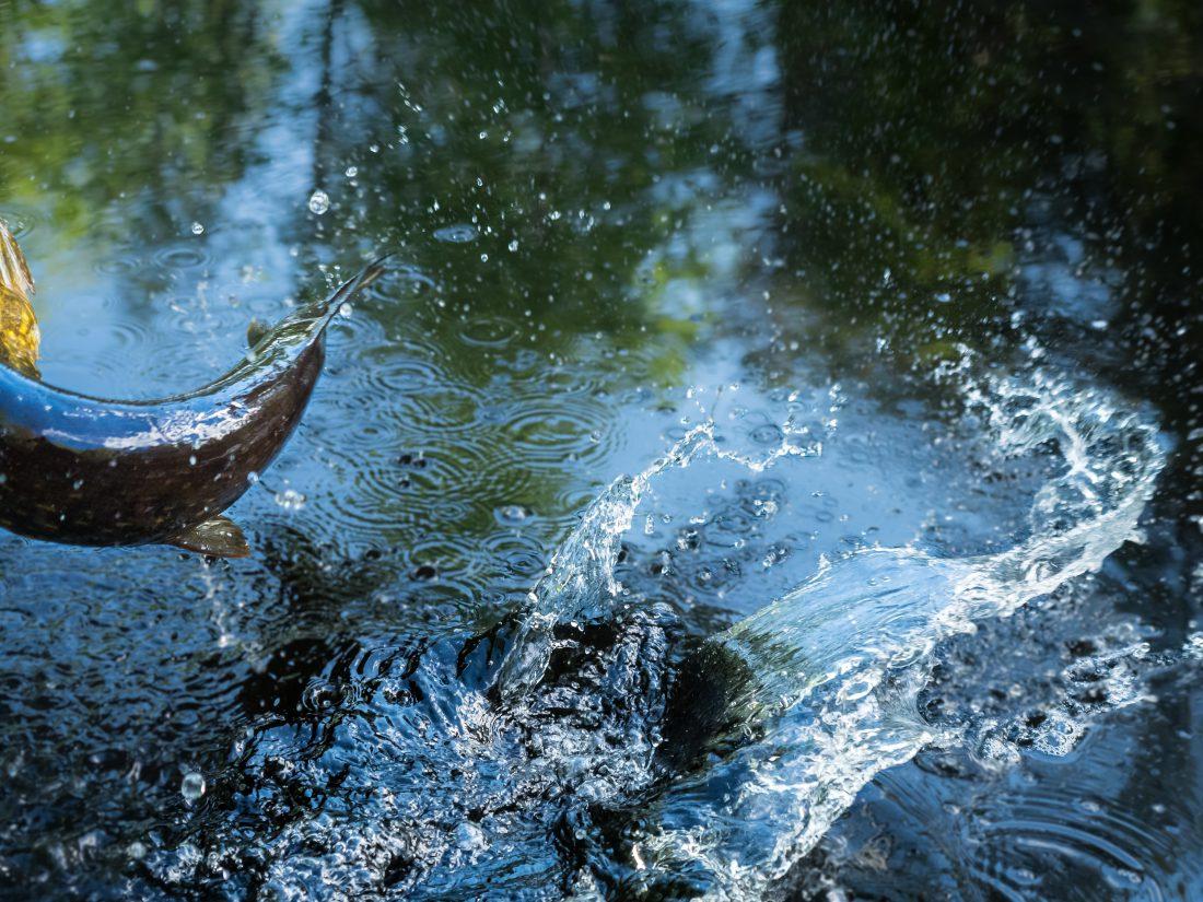 Hauen kalastusta popperilla